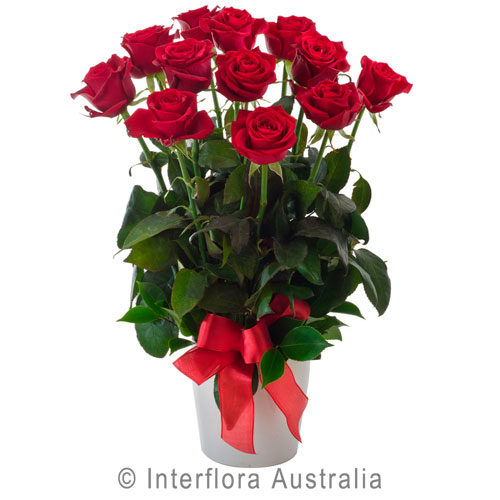 252-Arrangement-of-12-Red-Roses-in-a-Ceramic-Pot