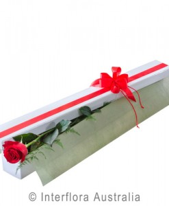 272-Single-Long-Stemmed-Red-Rose-in-Presentation-Box