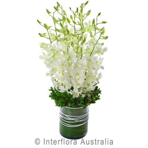 278-Orchid-Presentation-in-a-Glass-Vase
