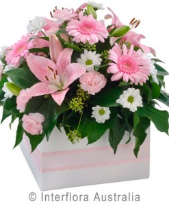 348-Mixed-Box-Arrangement