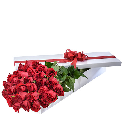 make it Special AUS 459 36 red roses