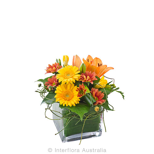 720 Mixed Arrangement in a Glass Cube