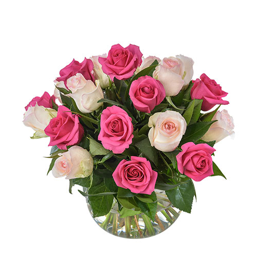 Delightful AUS 462 24 pink roses