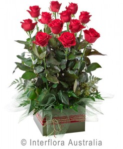216-Box-Arrangement-of-12-Long-Stemmed-Red-Roses