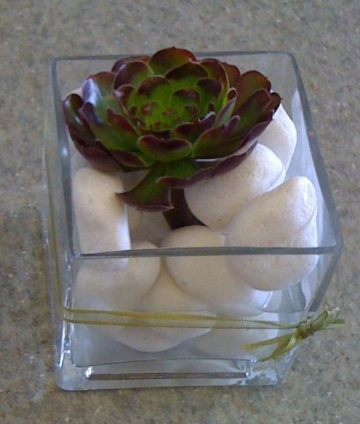 Baby-Succulent-gift-presentation